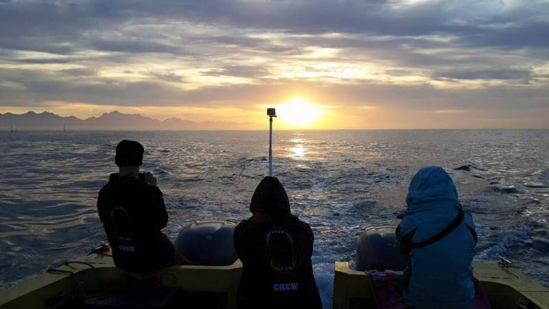 A shark research sunset in Mossel Bay