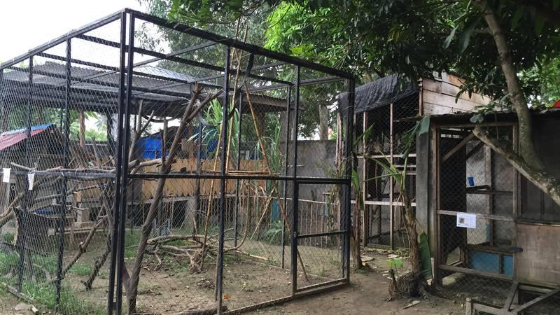 Baby gibbon enclosure