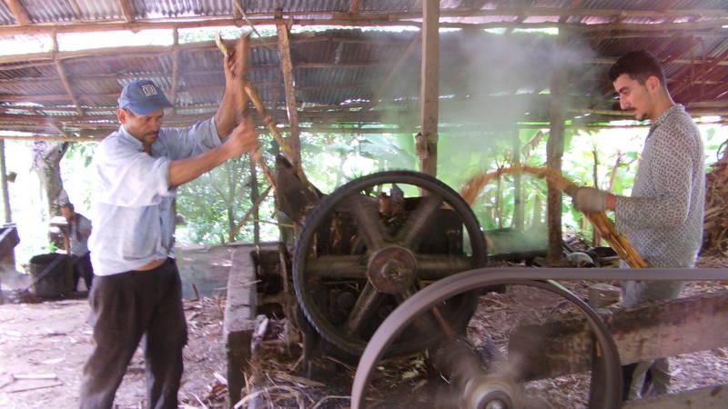 sugarcaneproductionarea