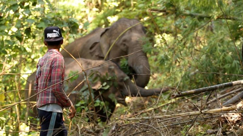 Witness the  bond between mahout and elephant