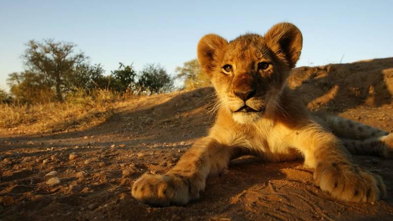 Wildlife Reserve Supporter