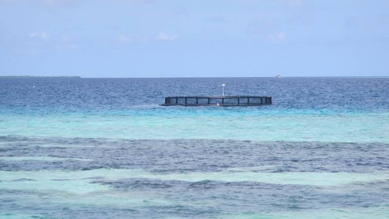 Sea cage to hold turtles before release