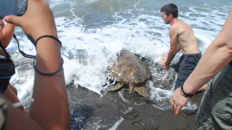 turtle saved from poachers