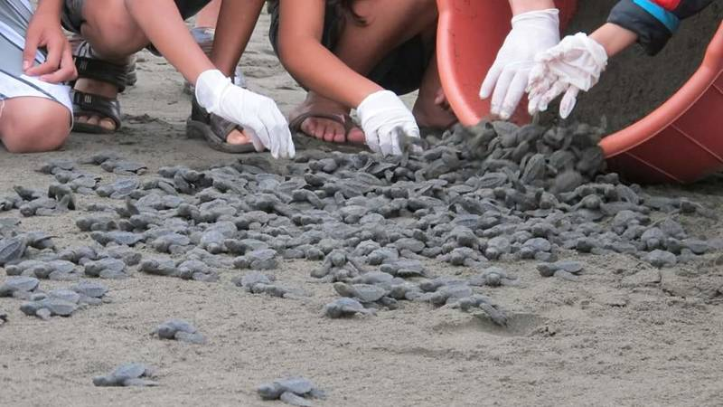 Thousands of turtles realized thanks to the volu