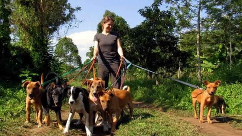 Animal Shelter Supporter