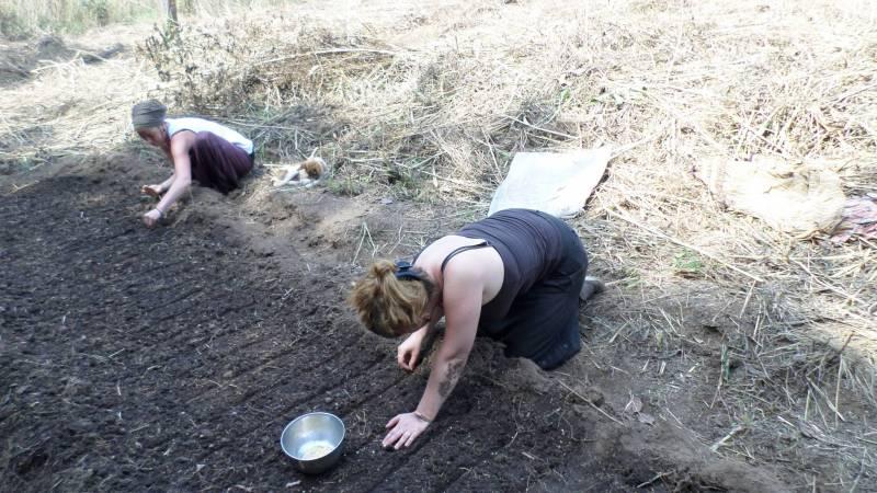 Volontaire prépare pépinière