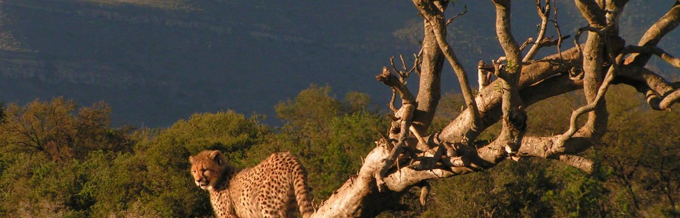 Big 5 Wildlife Conservation Assistant