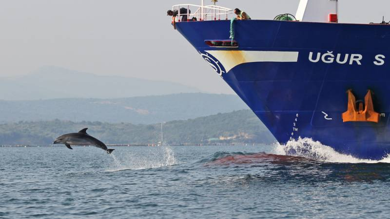 Bottlenose dolphin leaping ahead of a big ship