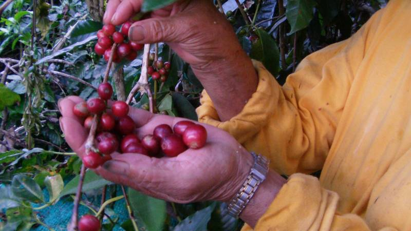 Coffee and Sugar Cane Farms Support needed