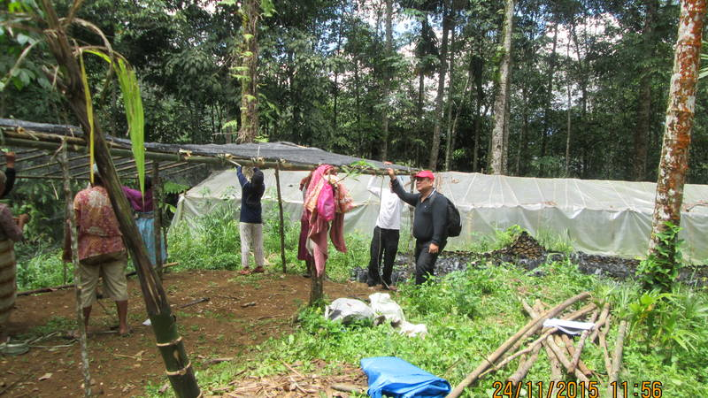 Community setting up coffee nursery