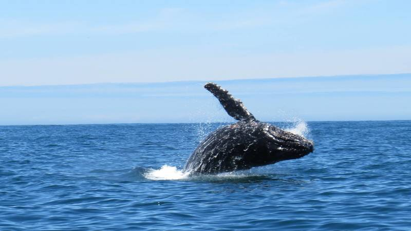 Dolphin & Whale Experience & Coastal Conservation