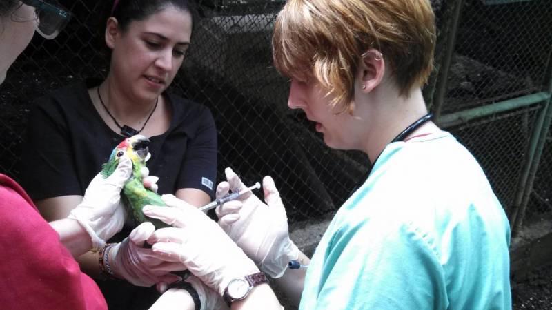 A volunteer medicates a parrot.