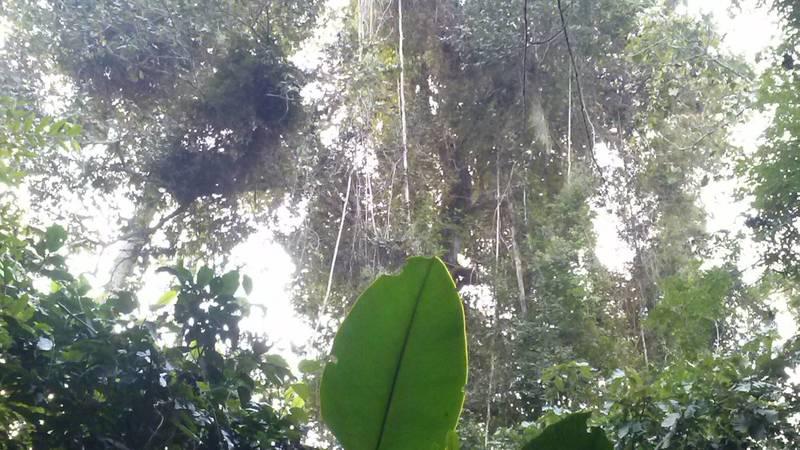 Explore the rainforest
