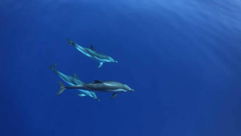 Mediterranean Whale and Dolphin Conservation
