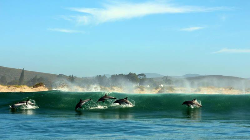 Marine & Coastal Conservation