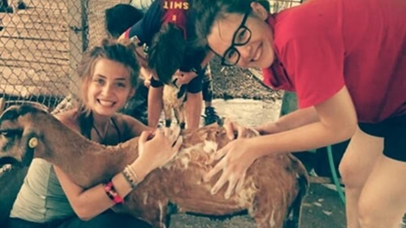 volunteer farm sanctuary Thailand