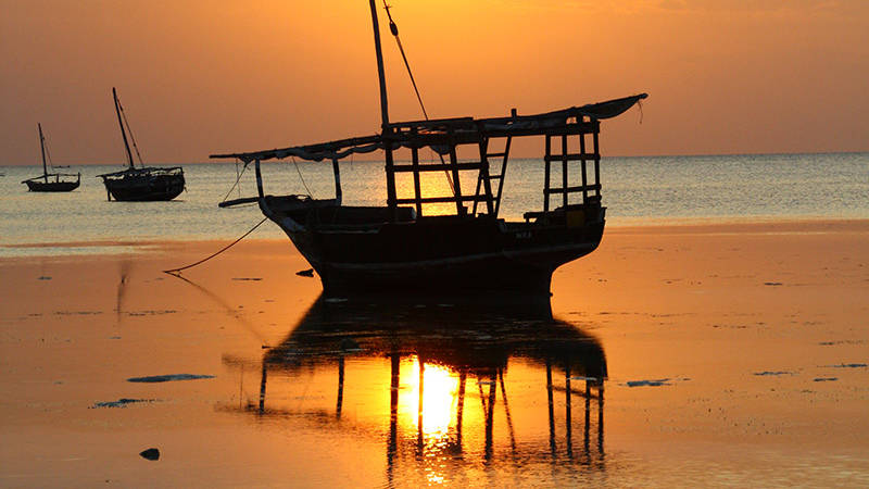 Zanzibar nights