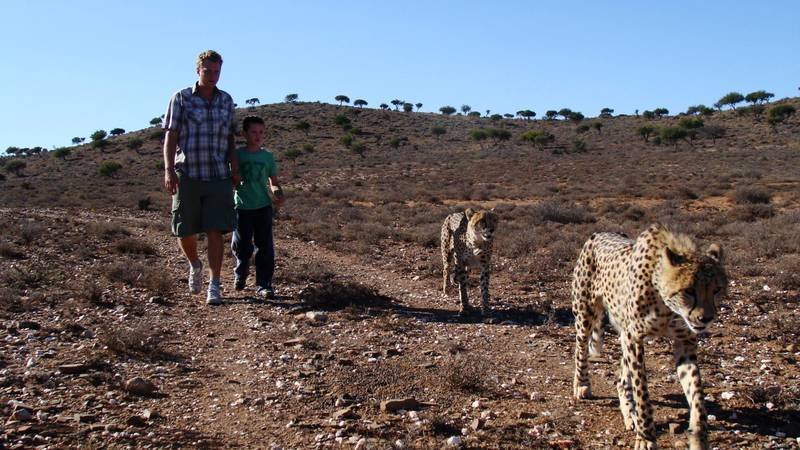 Walking with cheetahs
