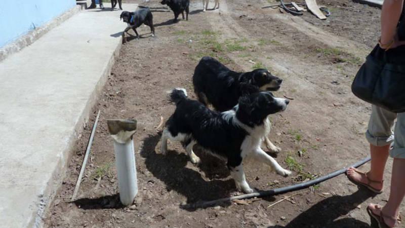 Walk dogs