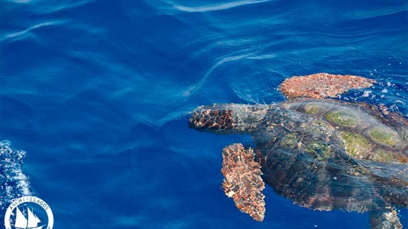 Marine Mammal & Sea Turtle Conservation