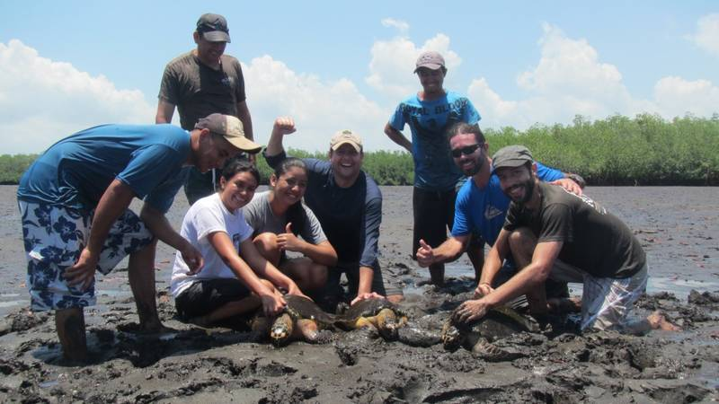 Sea Turtle Conservation Supporter