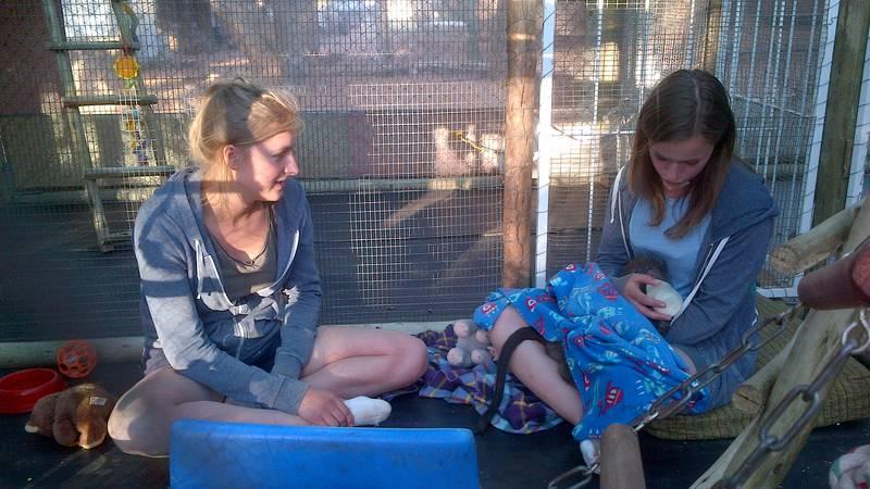 Bottle feeding baby baboon