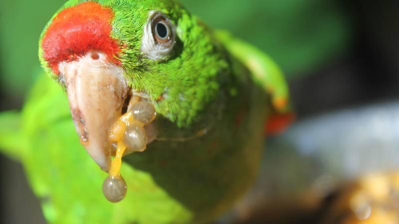 Animals & Reforestation
