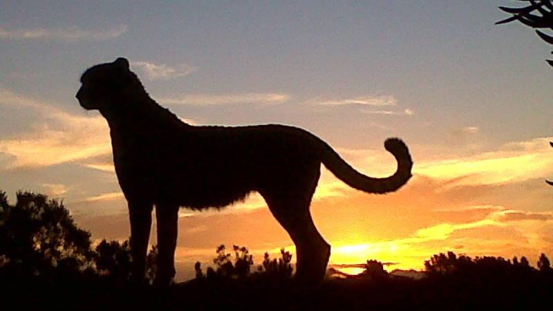 Cheetah Sunset Silhouette