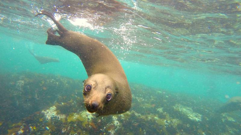 Curious seal during time off