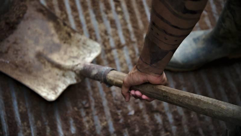 A volunteer shoveling manure