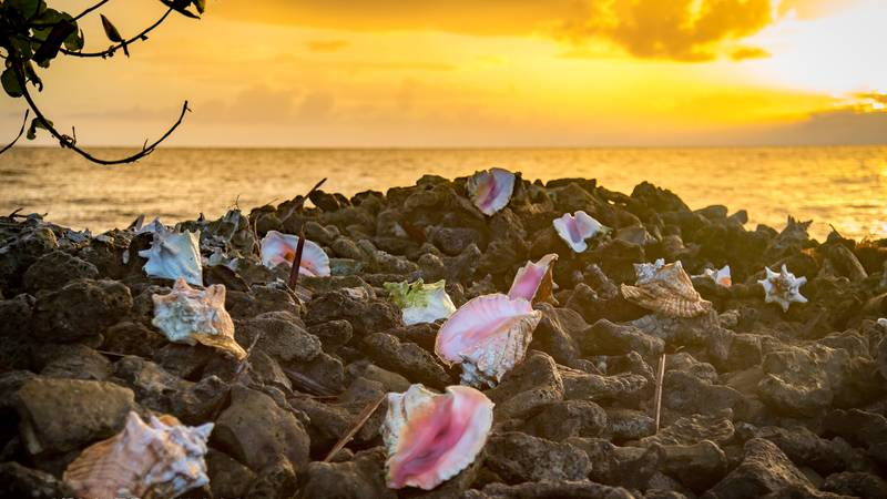 Conch Sunset
