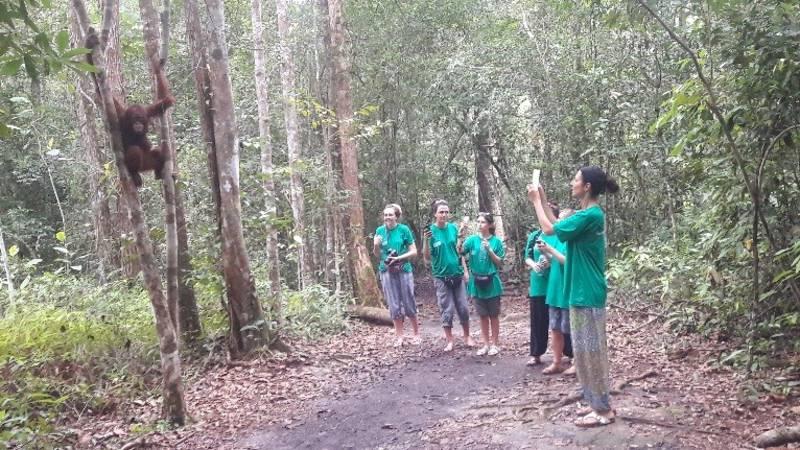 Orangutan and Habitat Conservation