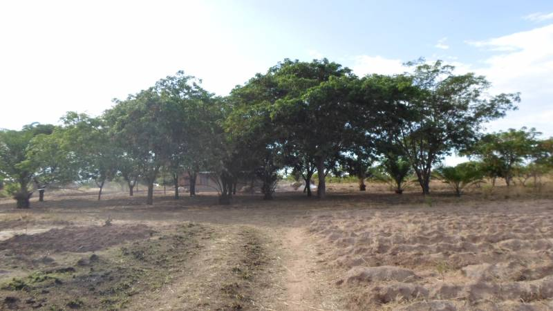 Project site for planting trees
