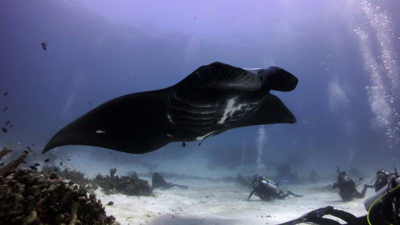 Marine Conservation & Diving Assistant