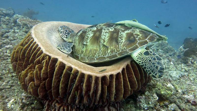 We love Green Turtles