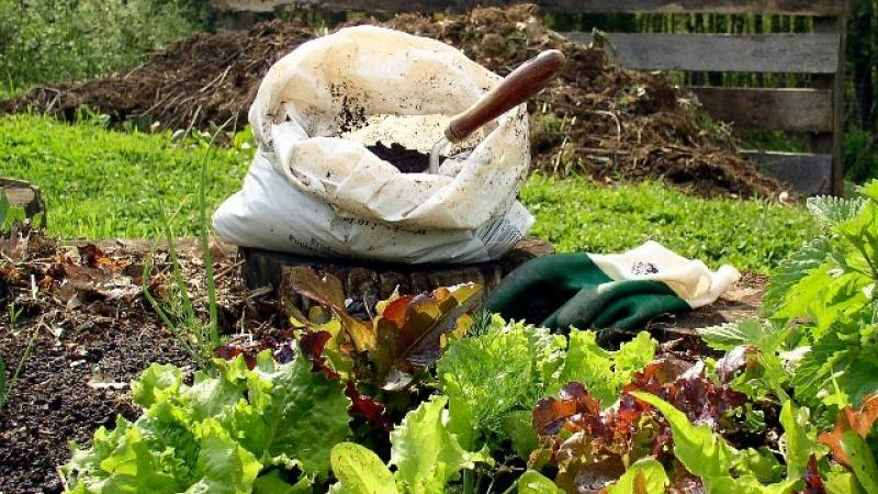 Fertilizing gardens with Compost!
