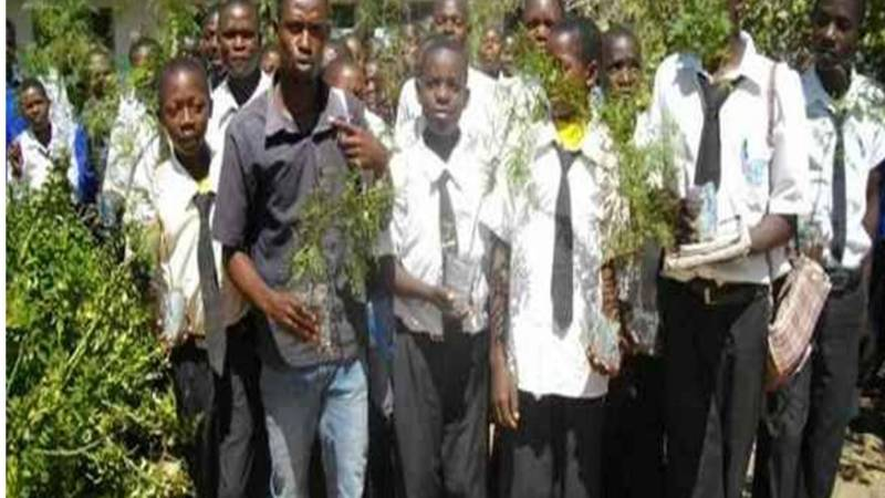 Secondary school student planting trees