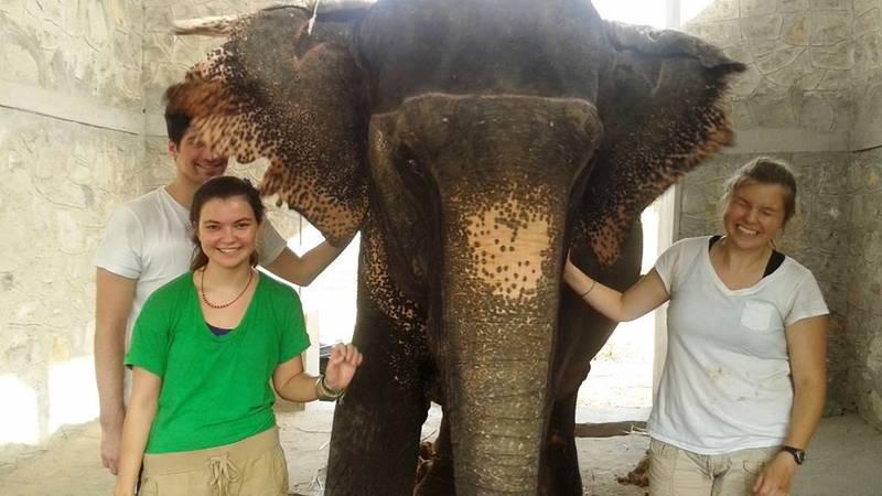 Elephant Conservation Work