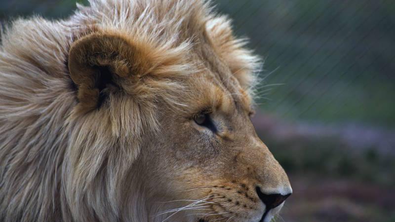 Big Cats Sanctuary