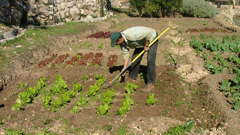 Ancient Agriculture Conservation