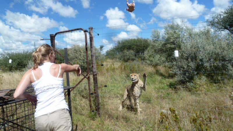 Big Cat Conservation & Research