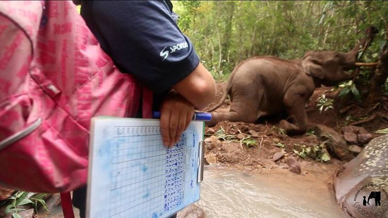 Collect data on natural elephant behavior