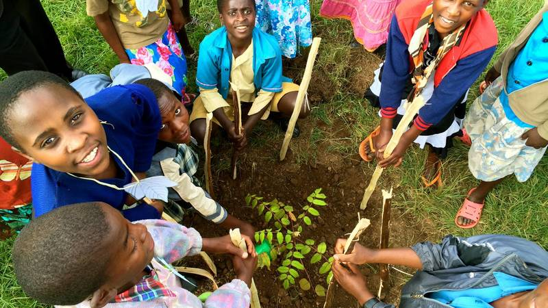 Tree planting exercises