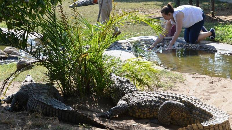 Cleaning croc enclosure