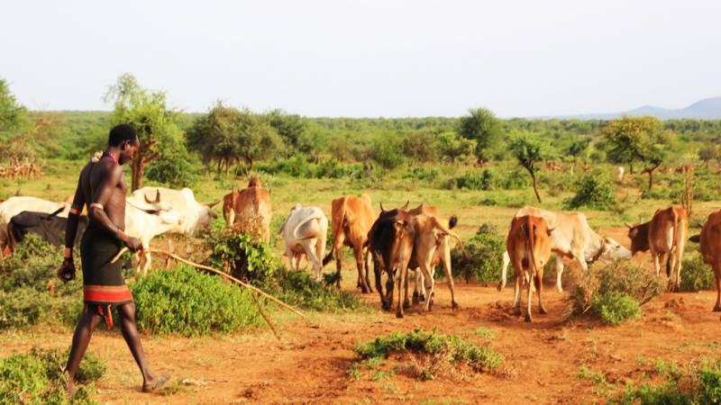 Hamar pastoralist