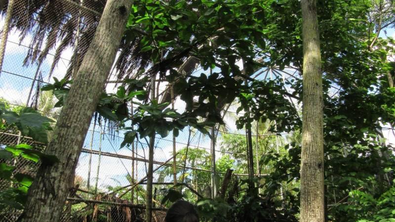 Volunteers take a look at enclosures.
