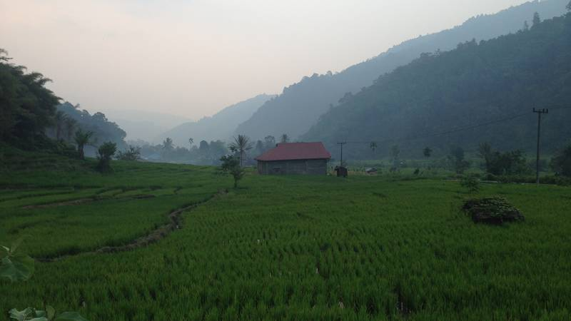 Rice paddies in the local area
