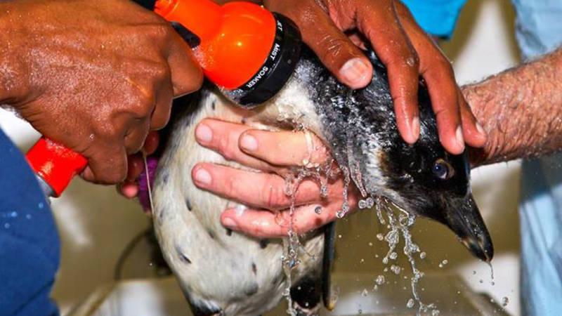 Marine Birdlife Conservation