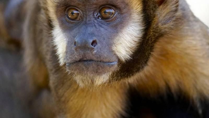Monkey at animal rescue center