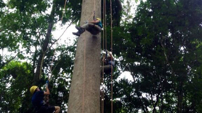 Tree climing in the rainforest